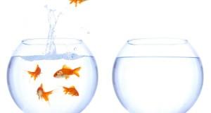 Lavoro e psicologi nuove opportunità
