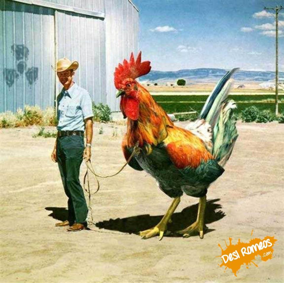 Piemonte: finanza per polli