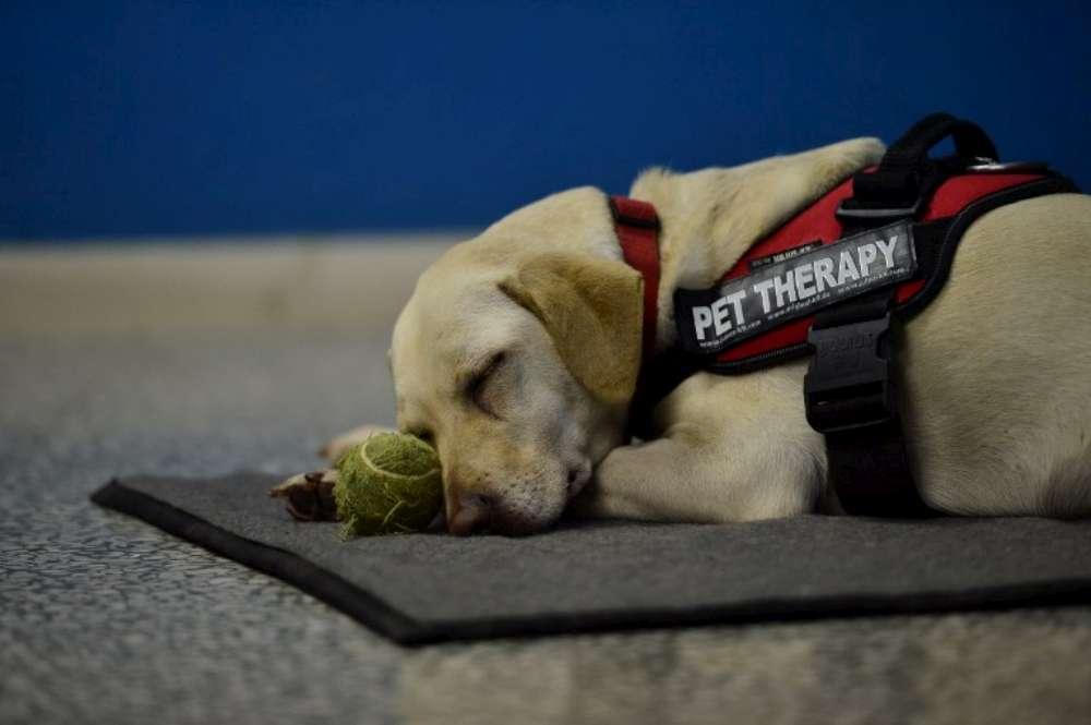 Pet Therapy: Il Ministero della Salute penalizza gli Psicologi?